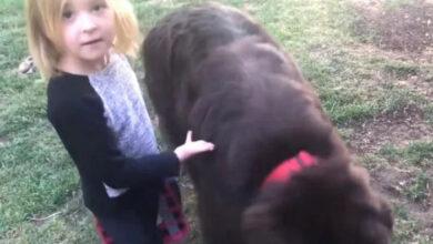 Photo of Majka je optužila psa da je POJEO JASTUK, a devojčica je preuzela ULOGU ADVOKATA (VIDEO)