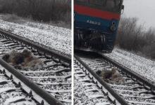Photo of Povređeni pas NIJE MOGAO DA SE POMERI SA PRUGE, a njegov prijatelj je DOŠAO DA GA SPASI (VIDEO)