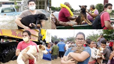 Photo of Ljudi iz Hondurasa PRVO SPASAVAJU SVOJE LJUBIMCE nakon uragana Eta, ne stvari