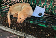 Photo of Pas nađen NAPUŠTEN NA KLUPI u parku, sa POTRESNOM PORUKOM jednog deteta