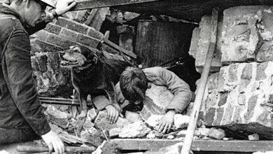 Photo of Upoznajte Ripa – ČUVENOG HEROJA iz Drugog svetskog rata KOJI JE SPASAVAO PREŽIVELE