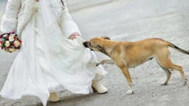 Photo of Niko na venčanju nije znao šta SKRIVA ISPOD HALJINE, a pas je osetio da NEŠTO NIJE U REDU