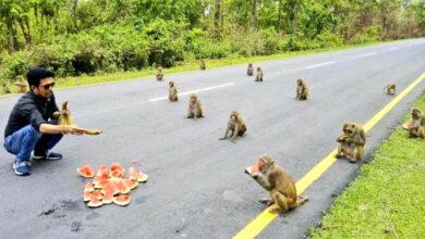 Photo of Majmuni su na FIZIČKOJ UDALJENOSTI dok ČEKAJU OBROK