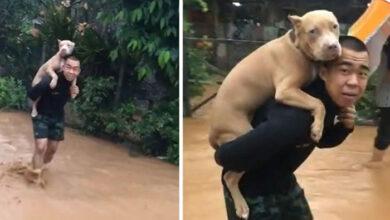 Photo of Čovek NOSIO SVOG PSA NA LEĐIMA, kako bi ga spasio od poplava na Tajlandu (VIDEO)