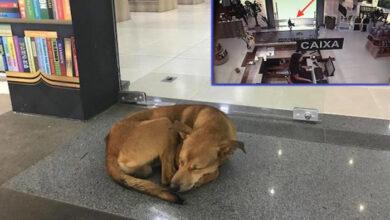 Photo of Pas sa ulice UKRAO KNJIGU O NAPUŠTANJU, iz knjižare u Brazilu (VIDEO)