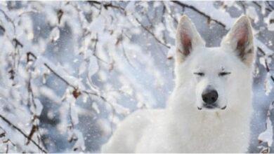 Photo of SLIKA DANA: Pas u snežnom pejzažu