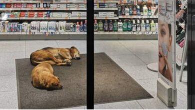 Photo of BRAVO ZA DM U NOVOM SADU: Pustili pse sa ulice da se ugreju i spavaju