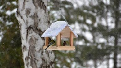 Photo of Hranilice postavljene u Sokobanji POSTALE OMILJENO MESTO ptica pevačica
