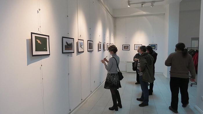 """Photo of Otvorena izložba NAJBOLJIH FOTOGRAFIJA PTICA sa XVI Konkursa """"Fondacije za zaštitu ptica grabljivica"""""""