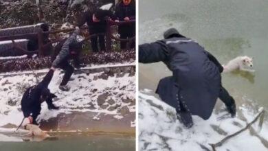 """Photo of Napravili """"ljudski lanac"""" kako bi SPASILI PSA iz zaleđenog jezera (VIDEO)"""
