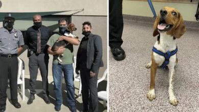 Photo of Policajci SPASILI PSA SA ULICE, a onda mu dali SPECIJALAN POSAO (VIDEO)