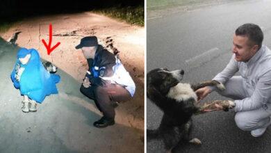 Photo of Napušten pas SPASIO ŽIVOT POVREĐENOM BICIKLISTI koga nije poznavao