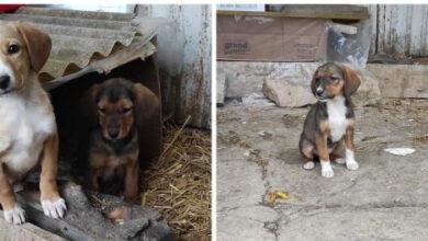 Photo of KNJAŽEVAC: Troje divnih štenaca TRAŽE DOM