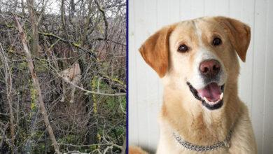 Photo of Ostavljen pas u šumi VEZAN ZA DRVO u okolini Velike Gorice…