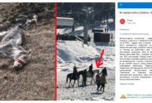 Photo of Kobila na Zlatiboru je UMRLA USLED SMRZAVANJA