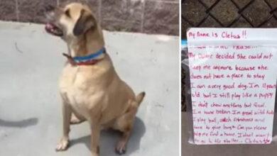 Photo of Jedanaestogodišnji pas OSTAVLJEN ispred prihvatilišta sa PORUKOM I IGRAČKAMA