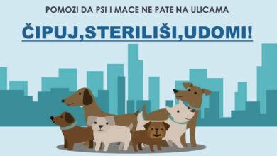 Photo of Akcija BESPLATNIH STERILIZACIJA VLASNIČKIH PASA u Ubu