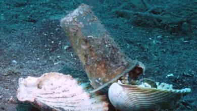 Photo of Ronioci NEŽNO UBEDILI hobotnicu da plastičnu čašu ZAMENI ZA ŠKOLJKU (VIDEO)