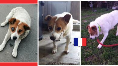 Photo of Sećate se starijeg psića sa Karaburme koji je završio u Ovči? EVO JAVLJA NAM SE IZ FRANCUSKE!