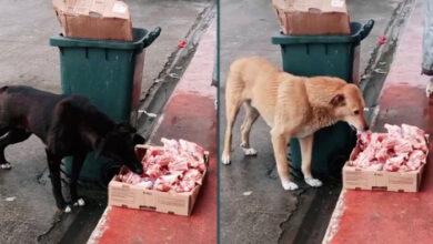 Photo of Čovek OSTAVLJA KUTIJE PUNE HRANE NA ULICI i redovno hrani napuštene pse (VIDEO)