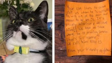 Photo of Mačak je došao sa PORUKOM NA OGRLICI, a onda su saznali da VODI DVOSTRUKI ŽIVOT