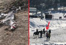 Photo of MRTVA KOBILA NA ZLATIBORU, 3 dana umirala u mukama bez ičije pomoći? KO JE ODGOVORAN?