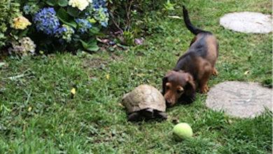 Photo of Pas i kornjača se IGRAJU SA LOPTOM (VIDEO)