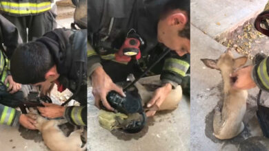 Photo of DRAMATIČNO SPASAVANJE PSA IZ POŽARA: Vatrogasci – svaka vam čast i HVALA! (VIDEO)