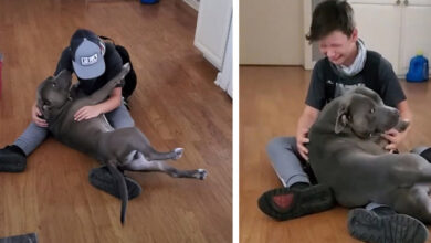 Photo of Dečaka SAVLADALE EMOCIJE kada je ponovo ugledao svog IZGUBLJENOG PSA (VIDEO)