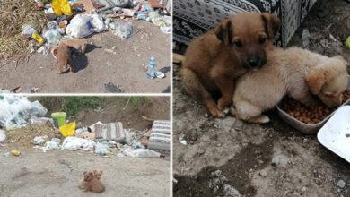 Photo of Štenci spaseni sa deponije u Beogradu TRAŽE DIVAN DOMIĆ (VIDEO)