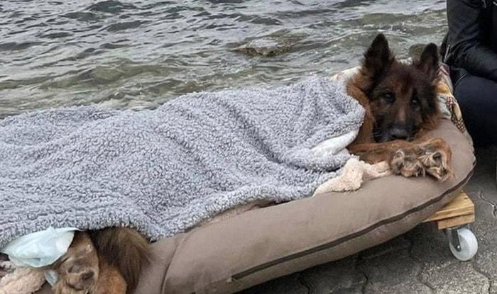 Photo of Napušteni, stari i paralizovani pas UPOZNAO JE LJUBAV I MORE pre nego što je OTIŠAO IZA DUGE (VIDEO)