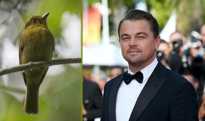 Photo of Leonardo DiKaprio proslavio otkriće 30 NOVIH VRSTA PTICA u Kolumbiji