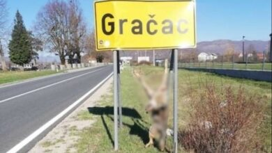 Photo of UZNEMIRUJUĆ PRIZOR u Hrvatskoj: Na saobraćajnom znaku pronađen ubijen i obešen vuk?!