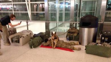 Photo of Pas ČUVA STRAŽU dok vojnik drema na aerodromu (VIDEO)