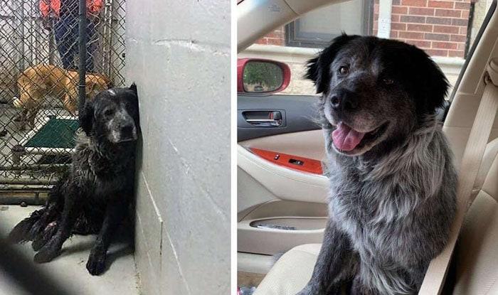 Photo of Pas sada NE MOŽE DA PRESTANE DA SE SMEJE, nakon što je spasen iz azila