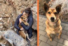 Photo of Jedna DUŠA SPAŠENA IZ RUŠEVINA u Rumuniji volela bi da pronađe svoj mir