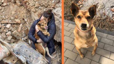 Photo of Jedna DUŠA SPASENA IZ RUŠEVINA u Rumuniji volela bi da pronađe svoj mir