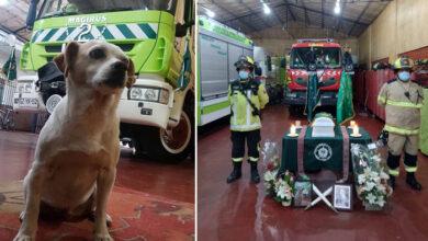 Photo of Čileanski vatrogasci ispratili na večni počinak VOLJENOG PSA SA KOJIM SU RADILI 12 GODINA