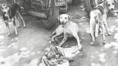 Photo of Priča o 3 psa sa ulice koji su 1996.godine ŠTITILI BEBU OSTAVLJENU PORED SMEĆA
