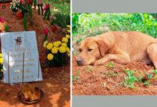Photo of VEOMA DIRLJIVO: Pas ne želi da napusti grob svog brata