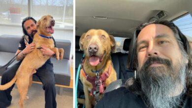 Photo of Izgubljeni pas PUTOVAO JE 1.324 KILOMETARA i sastao se sa vlasnikom 5 GODINA KASNIJE
