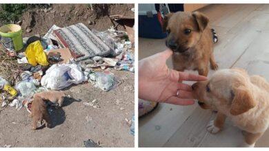 Photo of Sećate se bebica spasenih sa deponije u Beogradu? GORI IM POD ŠAPICAMA – POTREBAN DOMIĆ!