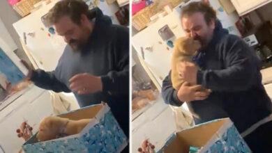 Photo of Čovek je ZAPLAKAO OD SREĆE kada je DOBIO ŠTENE, nakon gubitka voljenog psa (VIDEO)