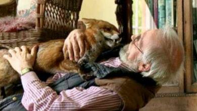 Photo of Čovek je u poslednji čas SPASIO POVREĐENU LISICU od eutanazije i UDOMIO JE (VIDEO)