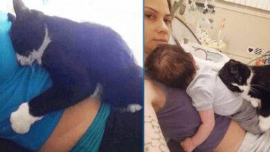 Photo of Kada je vlasnica ostala trudna, MAČKA koju je spasila SE NIJE ODVAJALA OD NJE!