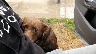 Photo of Divni pas je svakodnevno ČEKAO NA ISTOM MESTU da neko dođe i spasi ga (VIDEO)