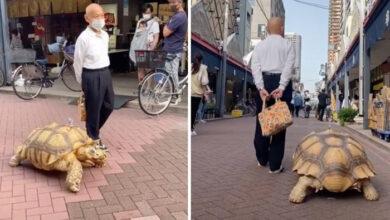 Photo of PRIJATELJI VEĆ 20 GODINA: Ovaj Japanac svakodnevno ŠETA SA SVOJOM KORNJAČOM Bon-čan (VIDEO)