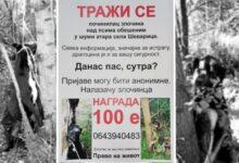 Photo of Podsećanje na monstruozno ubijanje pasa u Ševaricama kod Šapca: POTRAGA ZA POČINIOCEM JOŠ TRAJE