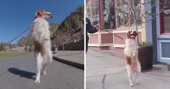 Photo of Pas koji je IZGUBIO OBE ŠAPE U NESREĆI dao je svetu lekciju da NIKAD NE TREBA ODUSTATI U ŽIVOTU (VIDEO)