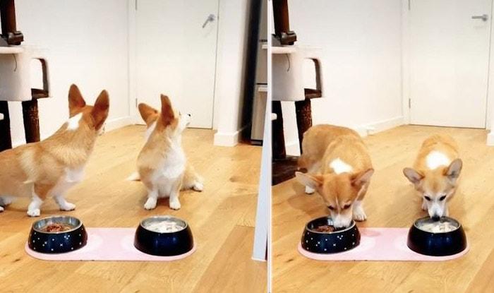 Photo of Dva korgija se VEOMA TRUDE DA SE ODUPRU ISKUŠENJU da počnu jedu (VIDEO)